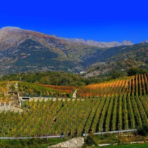 vignes de montagne - Grosjean
