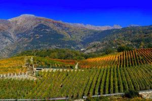 Vini di montagna - Maison Vigneronne Grosjean
